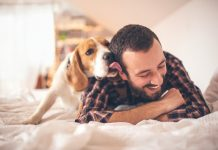 amor entre dono e cão