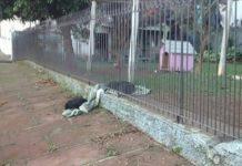 partilhar com um cão abandonado