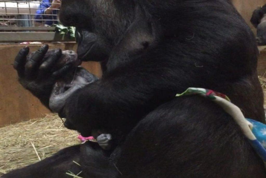 beijar o seu bebé recém-nascido