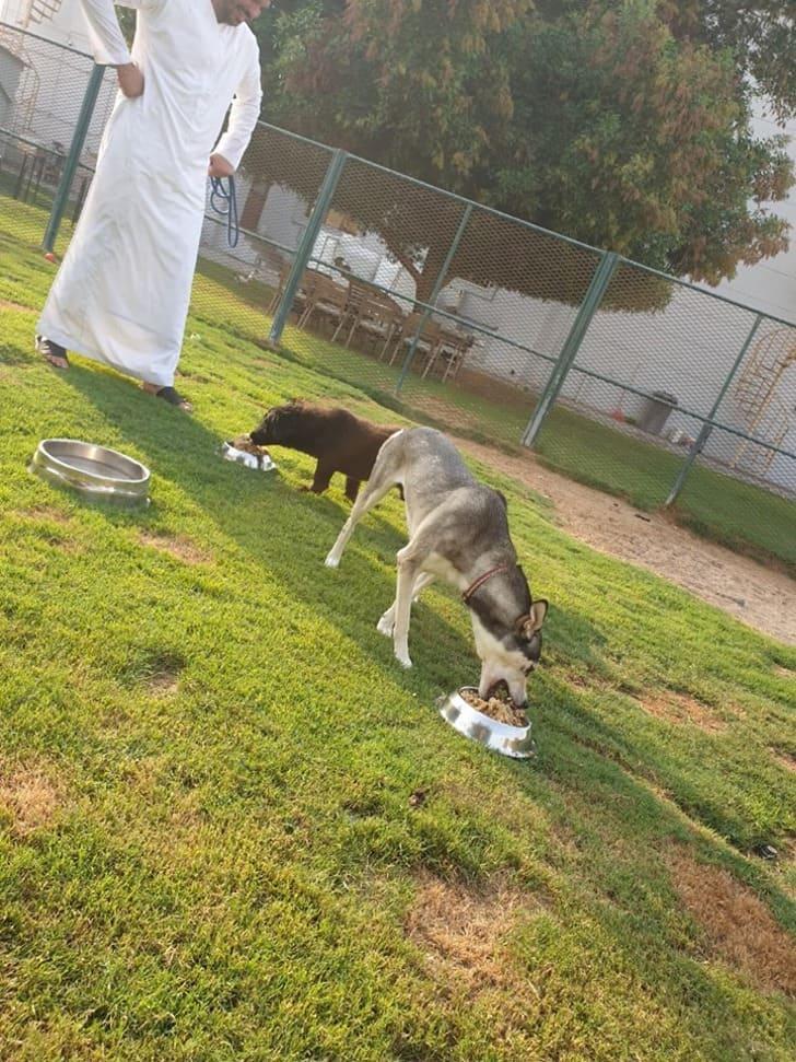 restos de comida para alimentar cães de rua