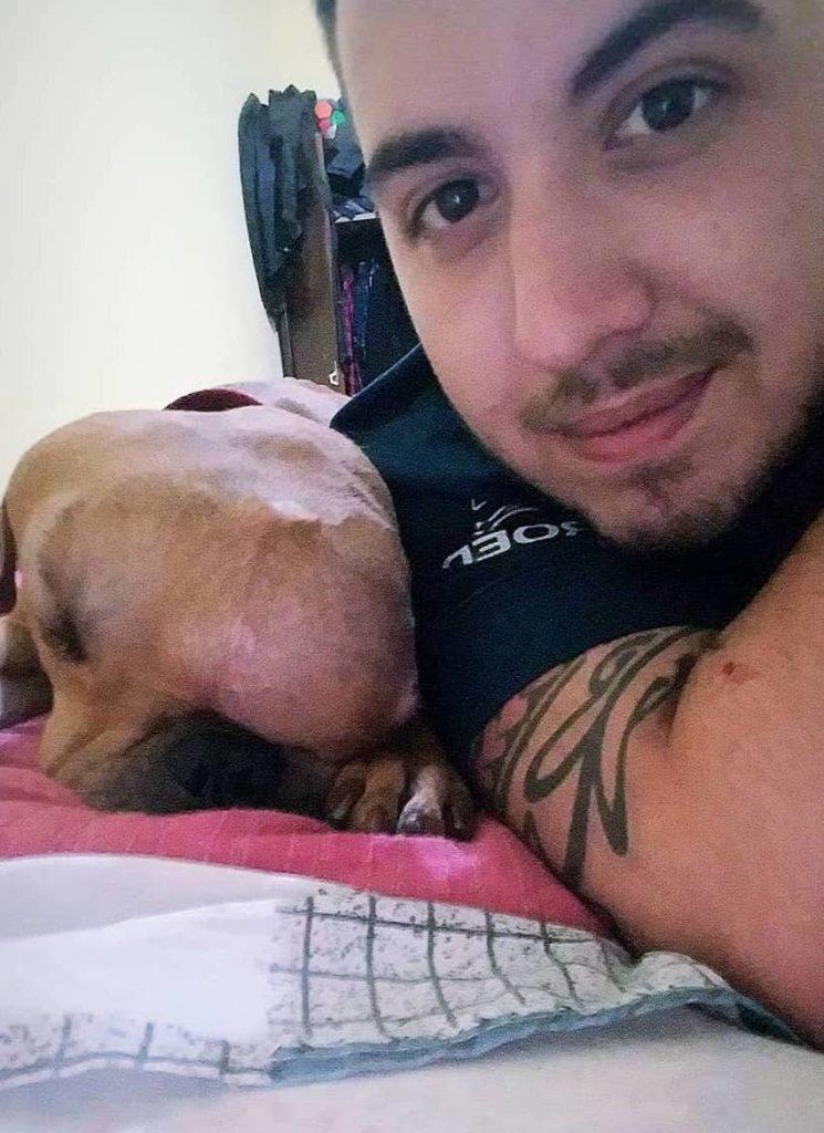 cão com cancro rejeitado