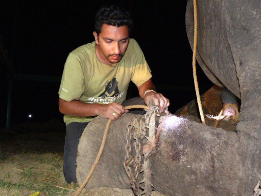 elefante chora ao ser resgatado