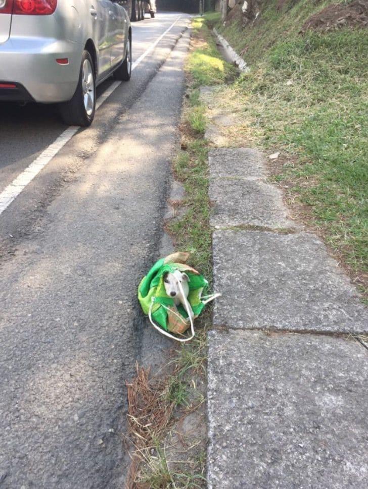 Cãozinho abandonado dentro de um saco