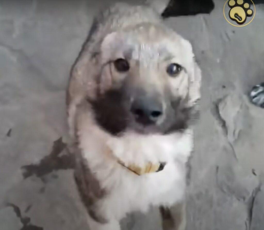 Cãozinho resgatado estava tão traumatizado