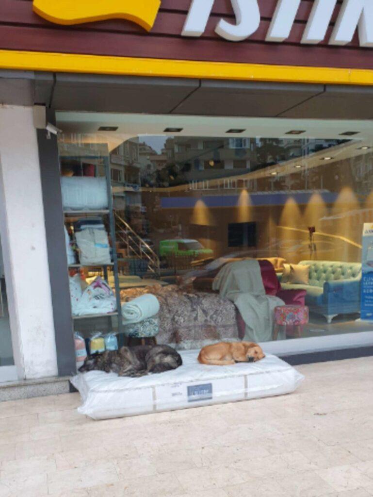 Loja de móveis garante que cães tenham um lugar para dormir.
