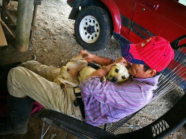 Cachorro corre no meio do trânsito arriscando sua vida, implorando por ajuda para seu dono ferido